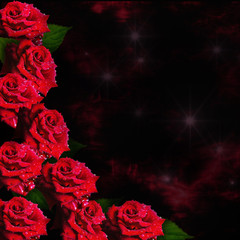 dark background with beautiful red roses