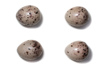 Emberiza hortulana. The eggs of the Ortolan Bunting in front of