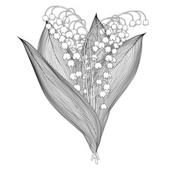 lily of the valley black and white outline