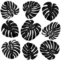 monstera leaves in black and white