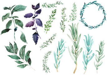 Spices for cooking. Rosemary branches in classic watercolor style on white background. Rosemaries branches, basil leaves, thyme circle, laurus illustration.
