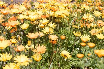 春イメージ 黄色い花