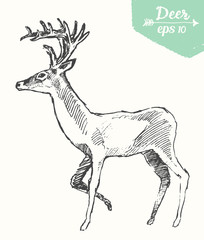 Sketch deer vintage illustration hand drawn vector