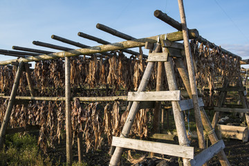 Wooden fish dryer, fish heads and backbones, Iceland