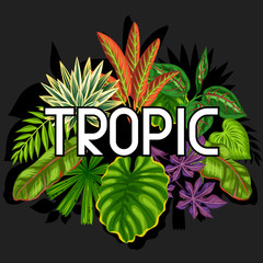 Background with stylized tropical plants and leaves. Image for advertising booklets, banners, flayers, cards, textile printing