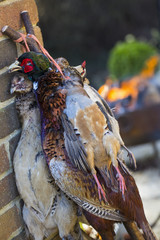 Pheasant and partridge, game bird carcasses with feathers, hung by the neck.