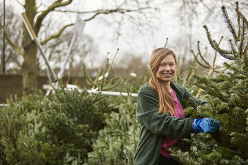 A member of staff in a garden centre, handling cut Christmas trees.