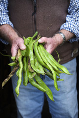 A man holding a handful of long vivid green runner beans, fresh vegetables.