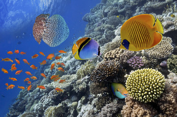 Aluminium Prints Under water Wonderful and beautiful underwater world with corals and tropica