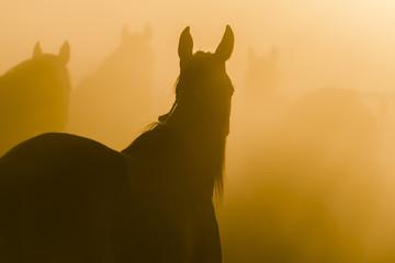 Konie pośród mgły
