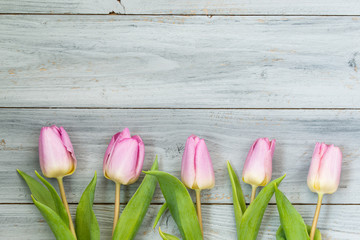 Row of light pink tulips on wooden background, top view