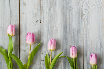 Row of light pink tulips on grey wooden background, top view