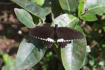 Butterfly in outdoor garden