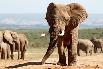 Boom i am Elephant