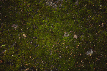 Background of moss surface