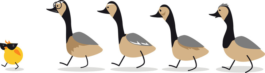 Little self-confident gosling leading a group of old geese, EPS 8 vector illustration, no transparencies