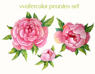 Watercolor peonies set in vector, Illustration.