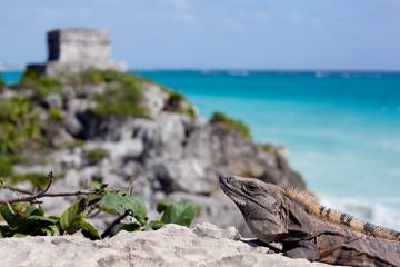 Iguana and pyramid.