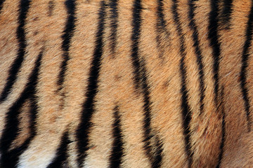 Real Tiger Texture