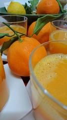 Frisch gepresster Orangensaft in Gläsern - Nahaufnahme