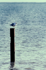 Seagull perched on a maritime marker