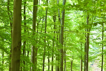 beautiful green forest with tree and leaf