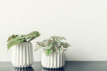 Flower pots on a black shelf