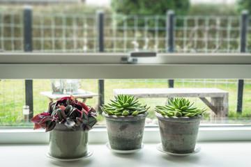 Plants in rustic pots