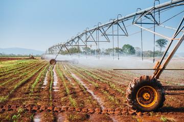 Center pivot sprinkler system watering corn shoots in a corn fie