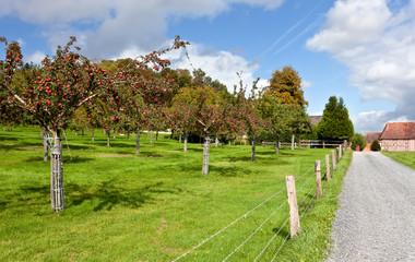 Calvados Produktion Apfelbäume, Normandie