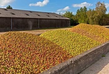 Calvados Produktion, Apfelernte, Normandie