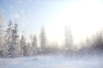 winter background blur forest snowflakes bokeh
