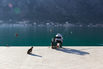 Fishing on the bay of Kotor. Cat waiting for a cach