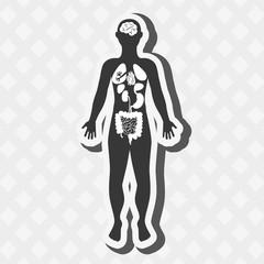 human anatomy design