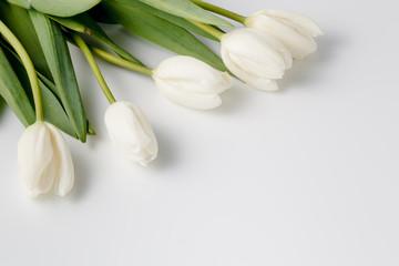 beautiful white tulips on white