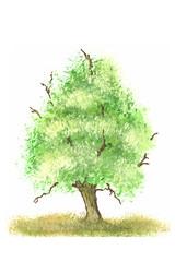 Kleine Malerei mit Deckfarben auf Weiß Fantasie Baum