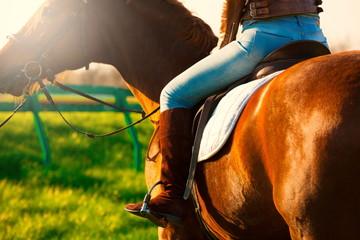 Leg woman sitting  horse. Close up. Back
