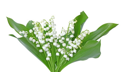 Photos illustrations et vid os de bouquet de muguet - Bouquet de muguet photo ...