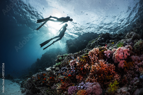 Wall mural Free divers
