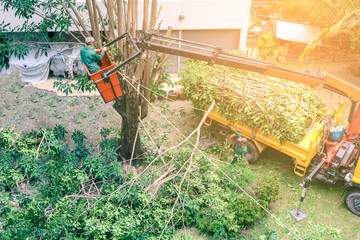 Gardener pruning a tree with chainsaw on crane.
