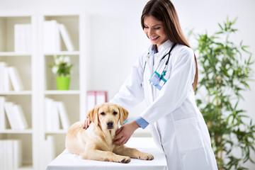 Female veterinary examining dog