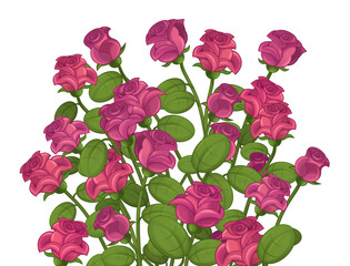 Cartoon roses - isolated - illustration for children