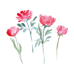 Watercolor Wild flowers set. Hand drawn vector illustration.