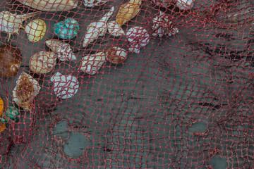 Sea shells on wood background