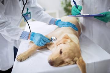 Vet dog healthcare