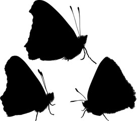 three butterfly silhouettes on white