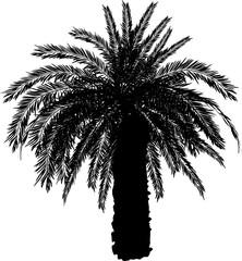 single black large palm tree isolated on white