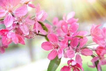 floral spring background in sunshine