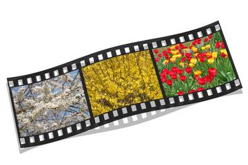 Frühling, Filmstreifen, Jahreszeit