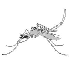 2d cartoon illustration of Aedes Aegypti